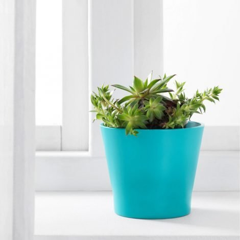 plant-pot-1523345b