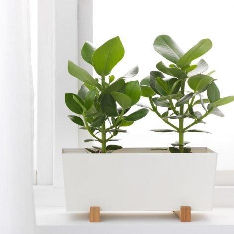 plant-pot-1511495-b