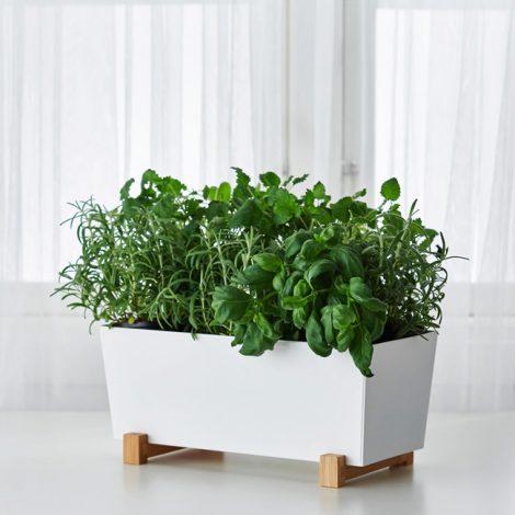 plant-pot-1511495-c