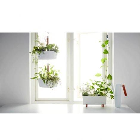 plant-pot-1511495-d