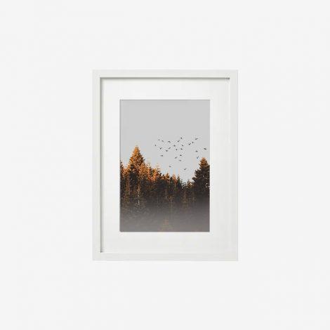 frame-1512424