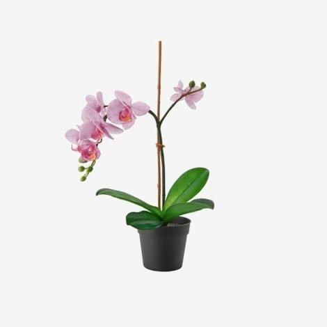plant-1524935